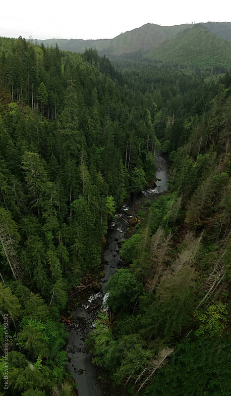 Vance Creek Runs Through Forest by Eric Bowley for Stocksy United