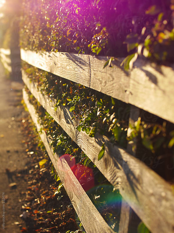Wooden fence with lens flare by rolfo for Stocksy United