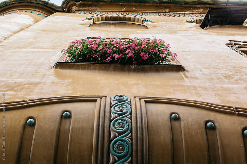 Pink flowers at a window of an old house by Gabriel (Gabi) Bucataru for Stocksy United