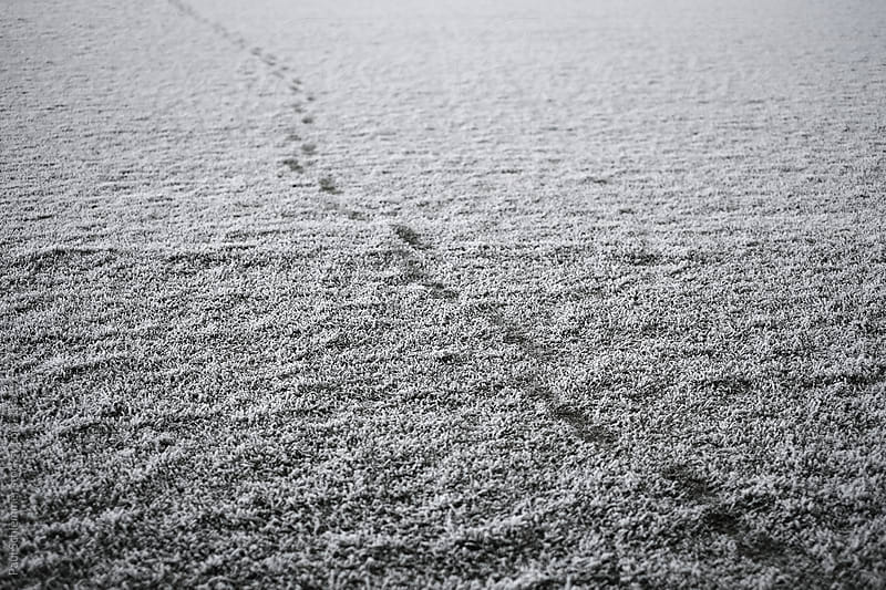 footsteps in a first snow by Paul Schlemmer for Stocksy United
