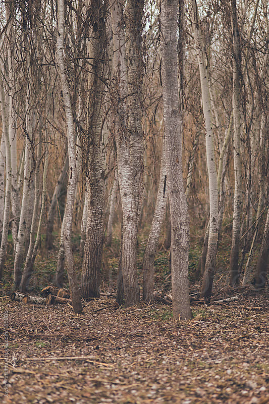 details of some trees in the forest at dusk by Javier Pardina for Stocksy United