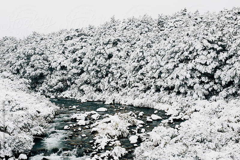 snow covered trees and creek by Cameron Zegers for Stocksy United