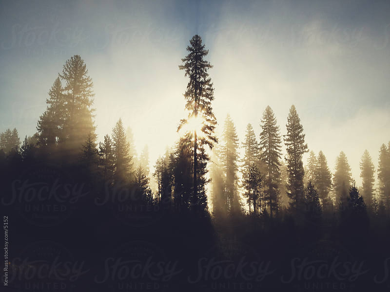Sunrise Forest Sun Rays by Kevin Russ for Stocksy United