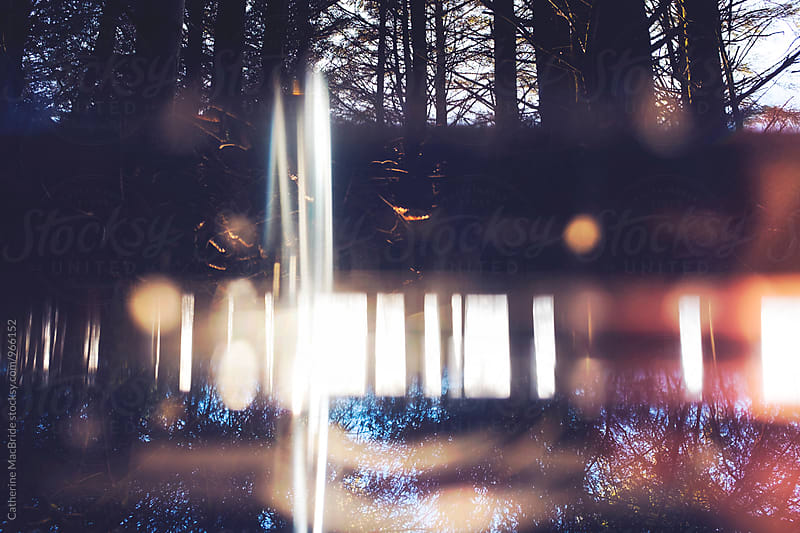 Forest abstract through glass prism by Catherine MacBride for Stocksy United