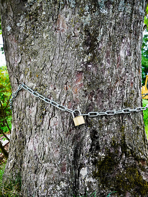 lock protection tree safe secure by rolfo for Stocksy United