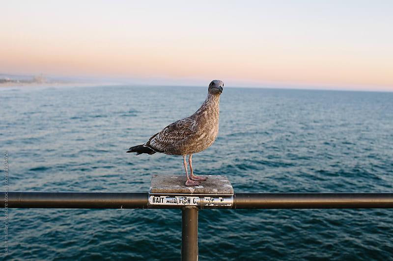 Bird Sitting on Pier by luke + mallory leasure for Stocksy United