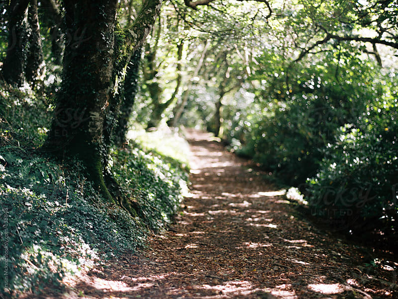 A winding path in Devon.  by Kirstin Mckee for Stocksy United