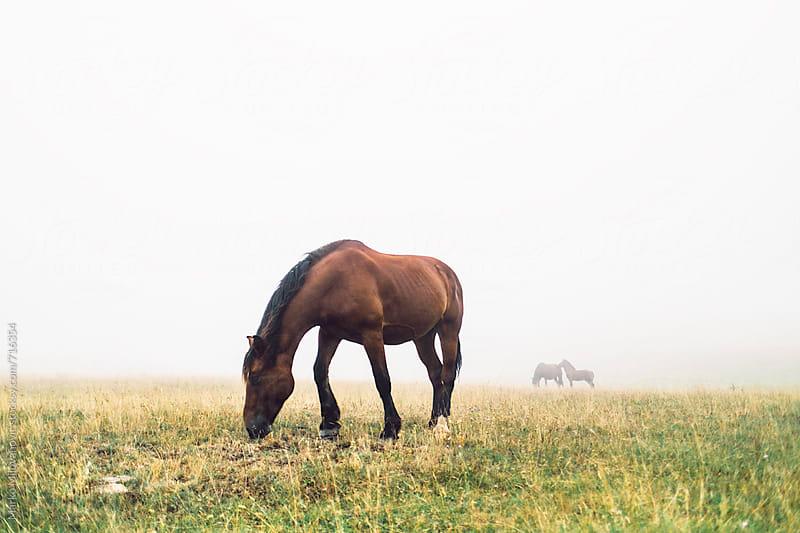 Horse on the foggy mountain by Marko Milovanović for Stocksy United