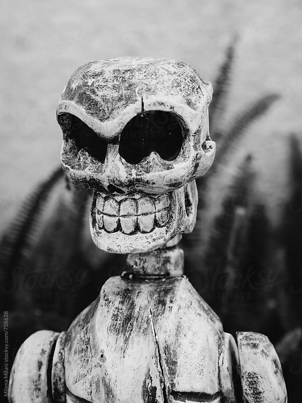 Skeleton by Milena Milani for Stocksy United