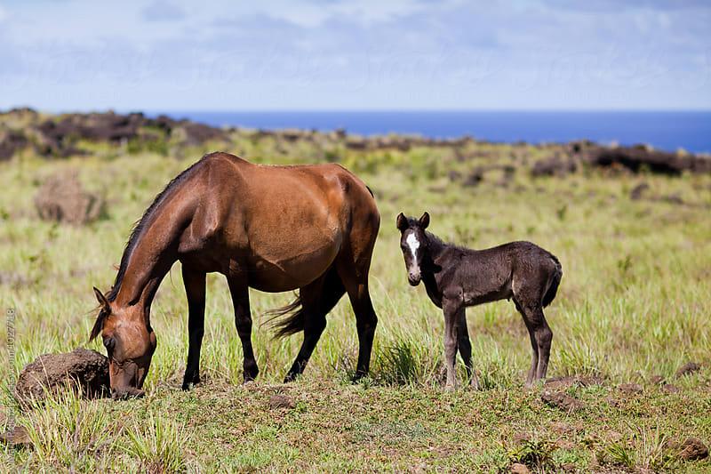 Easter Island (Rapa Nui) by Mark Pollard for Stocksy United