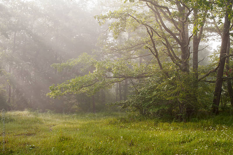 Foggy summer morning by Sveta SH for Stocksy United