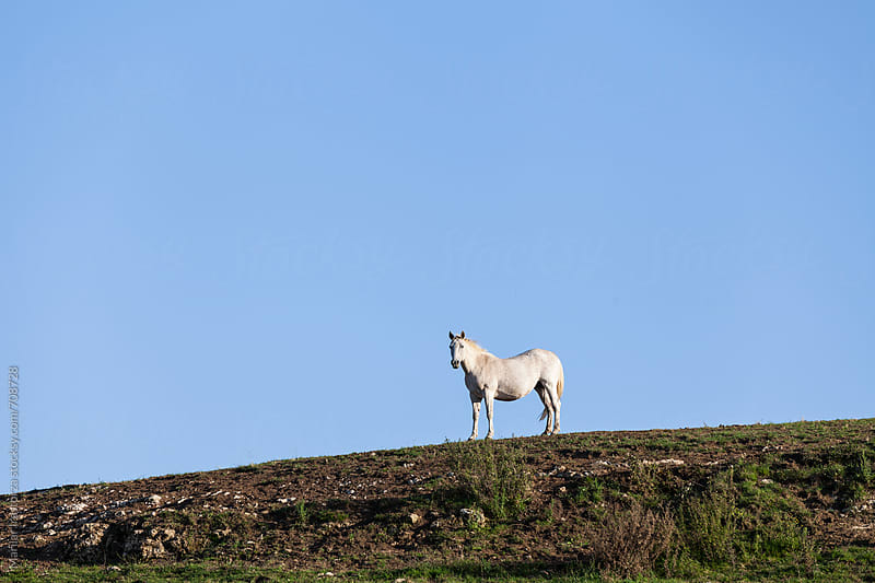 White horse on a hill by Marilar Irastorza for Stocksy United