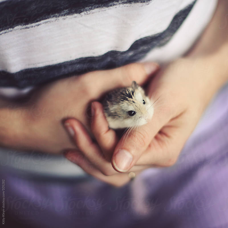 Holding a hamster by Kitty Kleyn for Stocksy United
