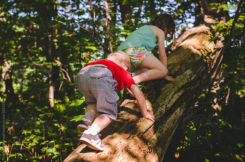 Two children climbing a large tree by Lindsay Crandall for Stocksy United