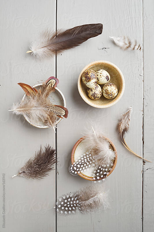 Quail's eggs and feathers of chicken, guinea fowl and goose by Elisabeth Coelfen for Stocksy United