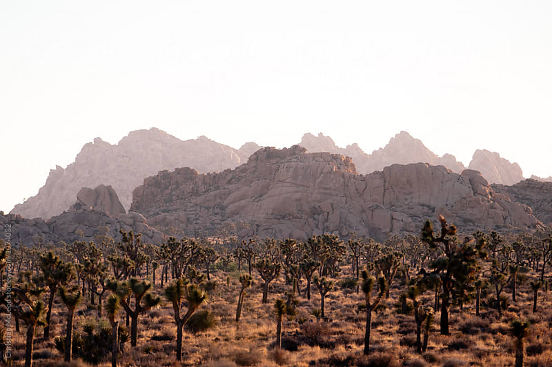 Desert palette. by Christian McLeod for Stocksy United