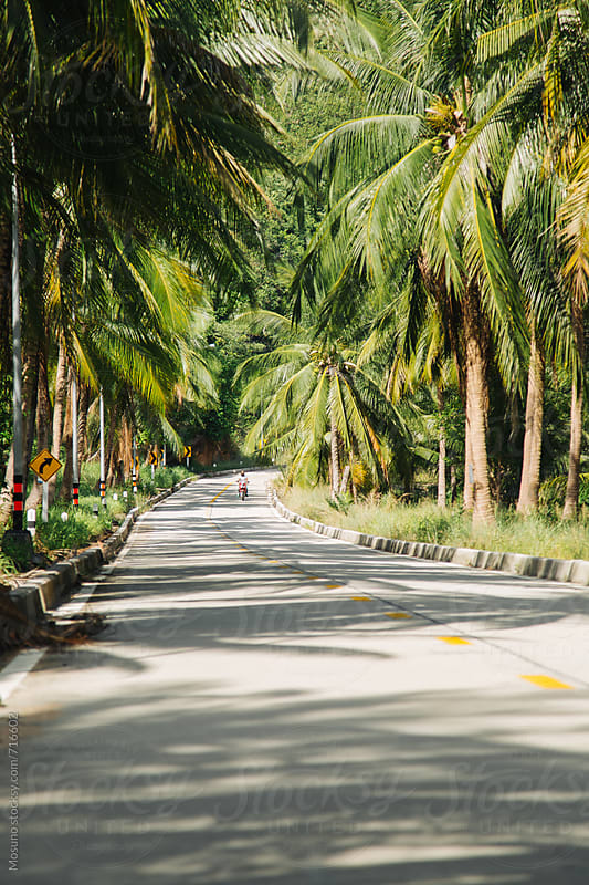 Road on a Tropical Island by Mosuno for Stocksy United