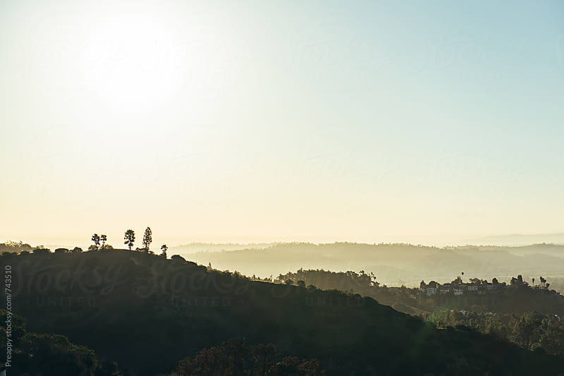 Vista of trees on Hollywood hills at sunrise by Preappy for Stocksy United