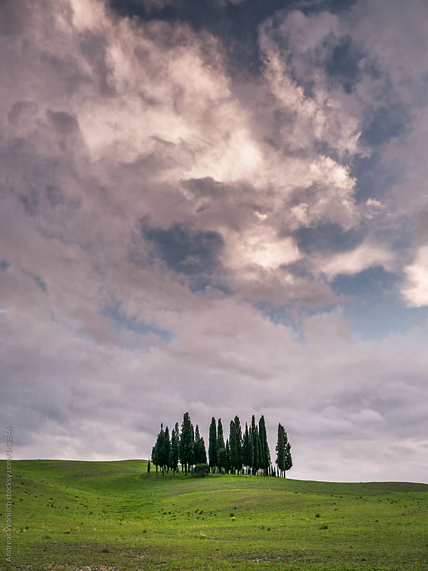 Spring landscape with cypresses in Tuscany's Val'Dorcia by Andreas Wonisch for Stocksy United
