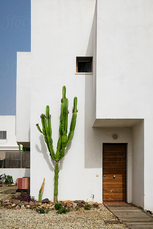 Cactus on the white walls of Cabo de Gata, Andalusia, Spain by Bisual Studio for Stocksy United