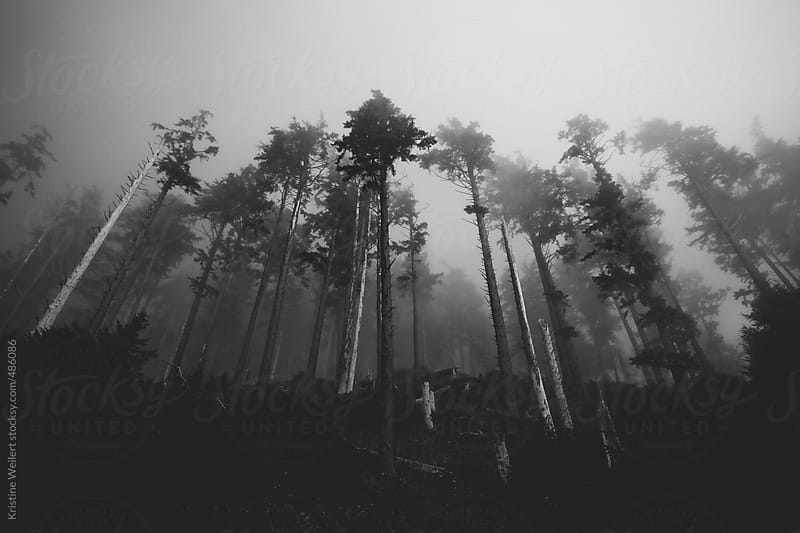Black and White Silhouette of a Line of Trees in Fog by Kristine Weilert for Stocksy United