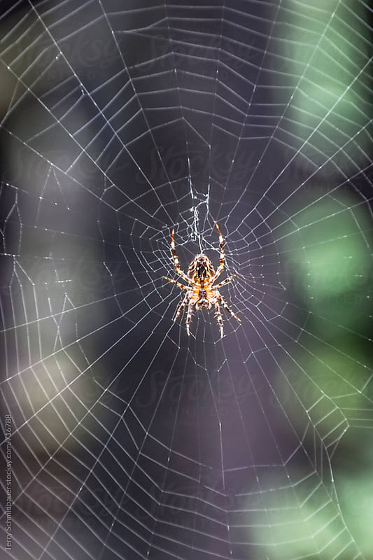 Spider's Web by Terry Schmidbauer for Stocksy United