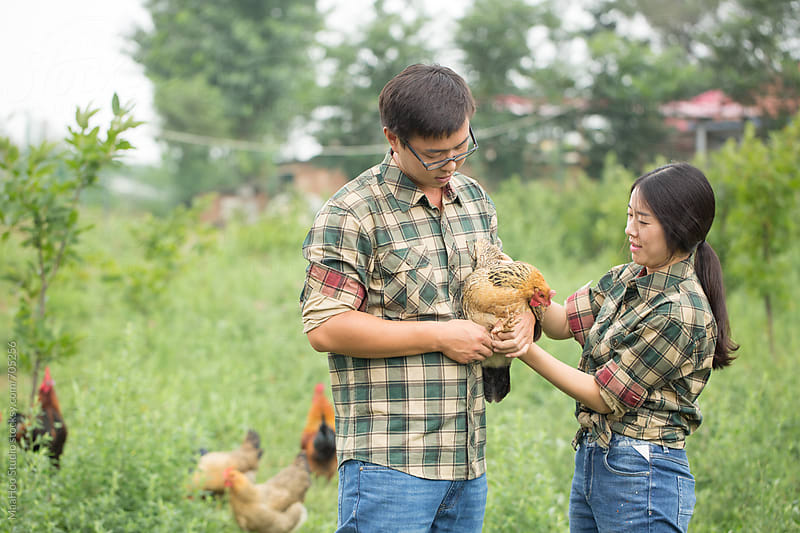 Young couple farmer holding chicken by Maa Hoo for Stocksy United