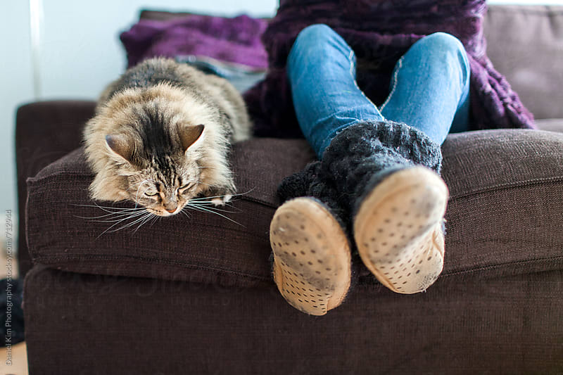 Cat lounging with owner by Daniel Kim Photography for Stocksy United