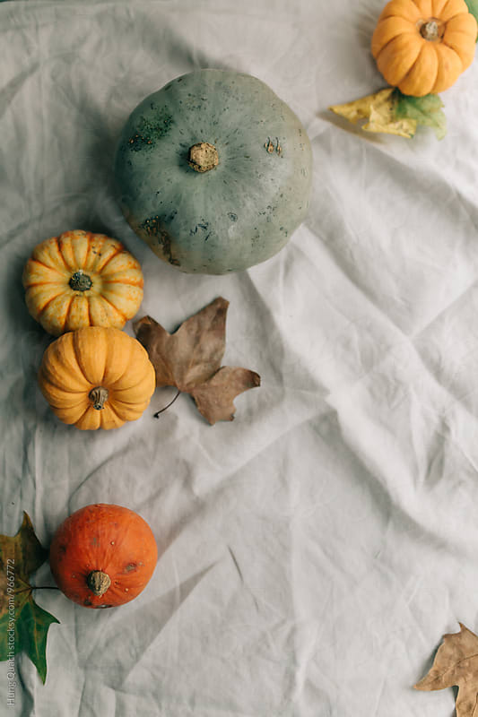 Pumpkins by Hung Quach for Stocksy United