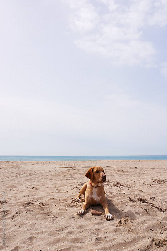 Cute labrador on beach against of waterscape by Guille Faingold for Stocksy United