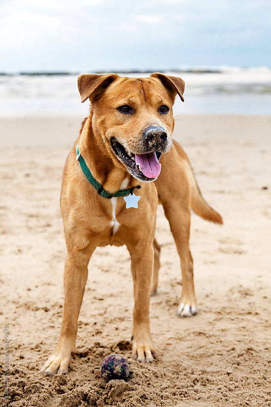 Joyful Dog on Winter Beach by Eldad Carin for Stocksy United