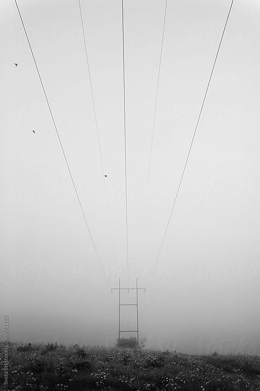 High-voltage electric line. Black&White image. by Svetlana Shchemeleva for Stocksy United