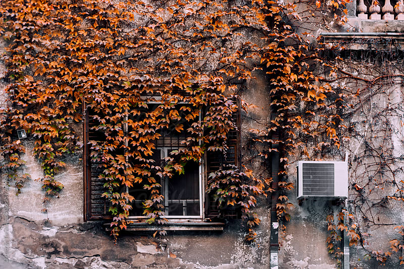 Old house covered with brown leaves by Dimitrije Tanaskovic for Stocksy United