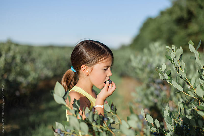 A girl eating a fresh blueberry while picking at a farm by Amanda Worrall for Stocksy United