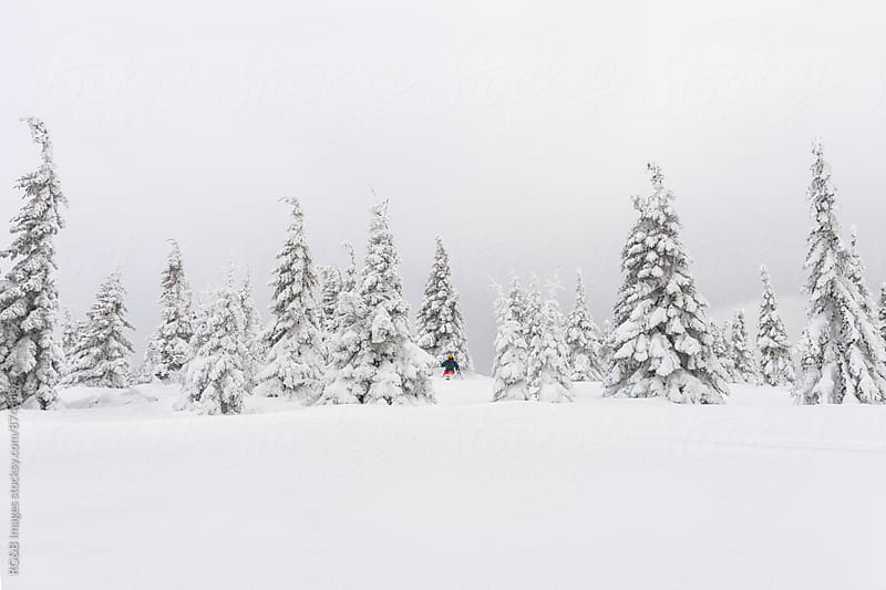 Freerider skiing through trees in powder snow by RG&B Images for Stocksy United