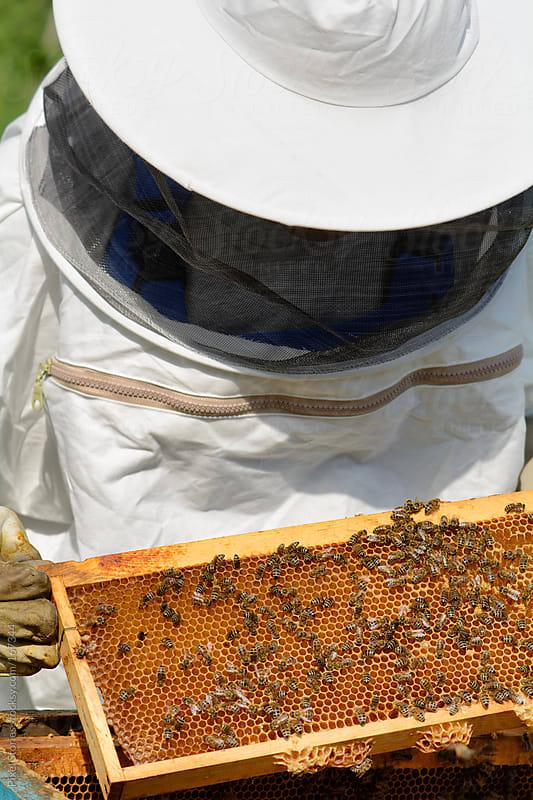 Beekeeper by Pixel Stories for Stocksy United