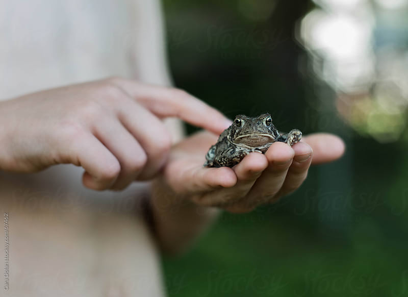 Toad sitting in the palm of a child's hand by Cara Slifka for Stocksy United
