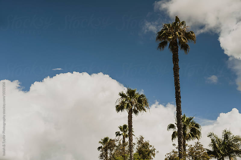Palm Trees & Clouds by Isaiah & Taylor Photography for Stocksy United