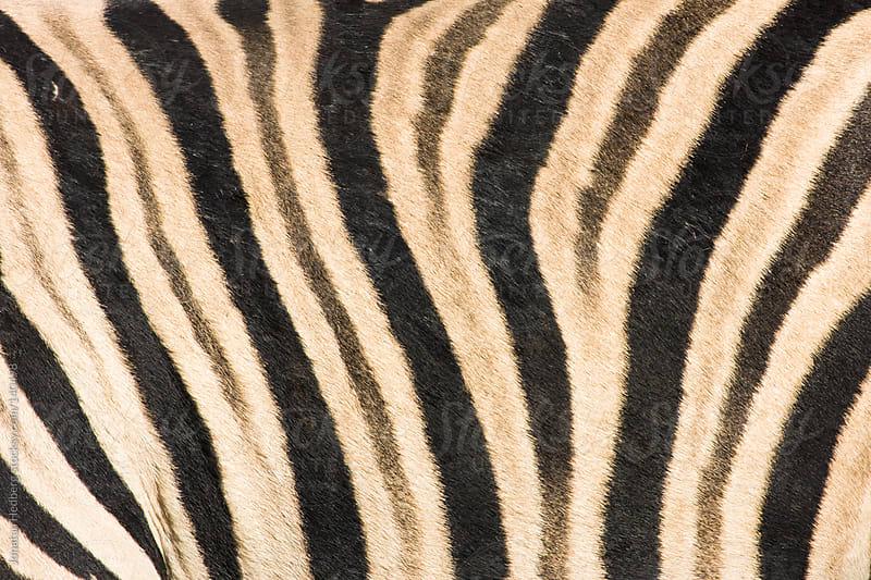 Zebra striping by Jonatan Hedberg for Stocksy United