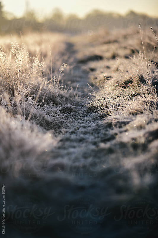Frosty path by Kirstin Mckee for Stocksy United