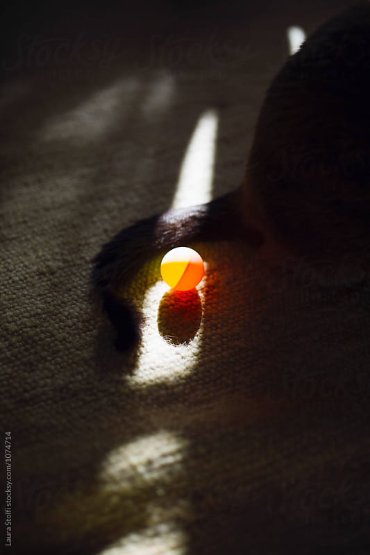 Cat and ball in the sun in shady room by Laura Stolfi for Stocksy United