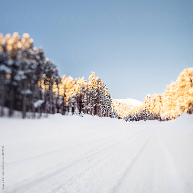 A snow covered country road in winter on a sunny day by Angela Lumsden for Stocksy United