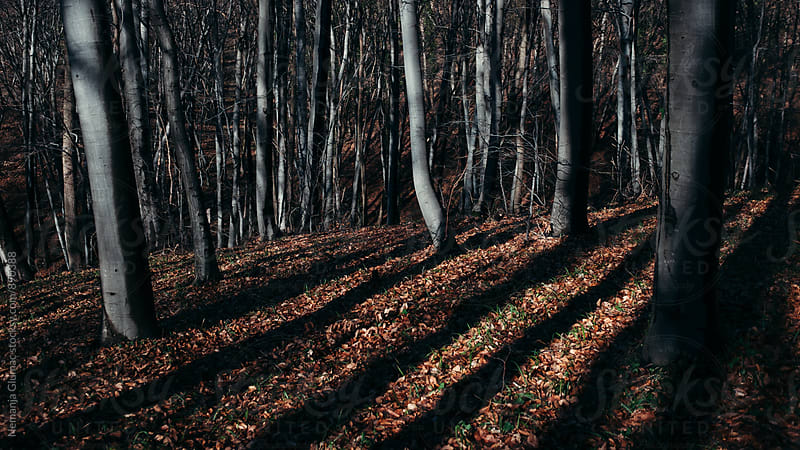 Dark Deciduous Forest by Nemanja Glumac for Stocksy United