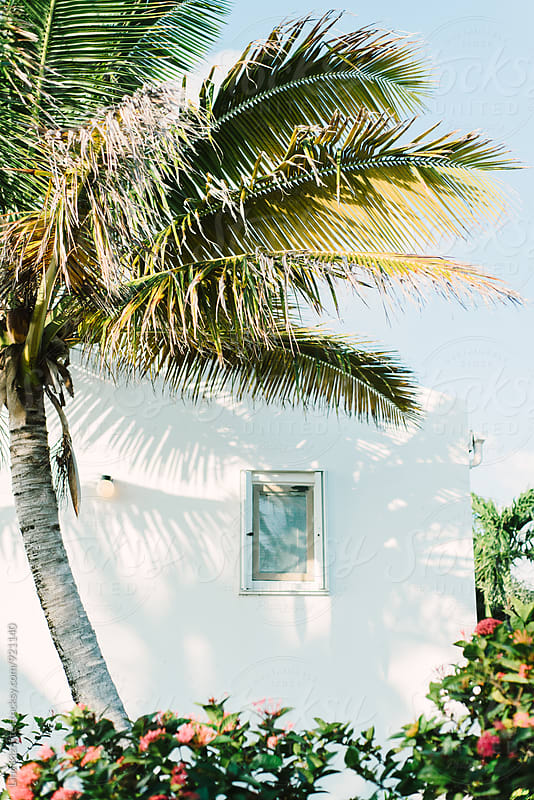 Palm tree next to the house by Lina Kiznyte for Stocksy United