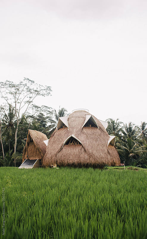 Beautiful bio architecture dome made from bamboo in the middle of the rice field