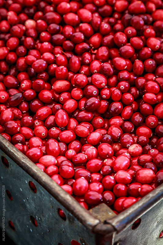 cranberries by alan shapiro for Stocksy United