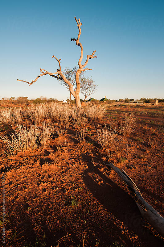 Dead Tree in the Australian Outback by Gary Radler Photography for Stocksy United