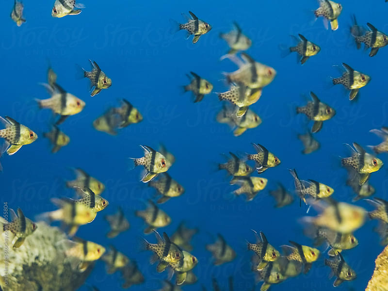 Close-Up Of Yellow Fish In Sea by unite images for Stocksy United