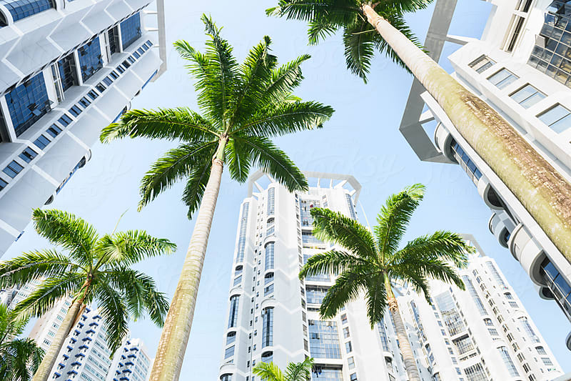 Palms green leaves and high-rise buildings with blue sky by Lawren Lu for Stocksy United