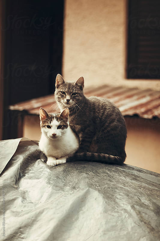 Two cats posing in the garden by Jovana Rikalo for Stocksy United